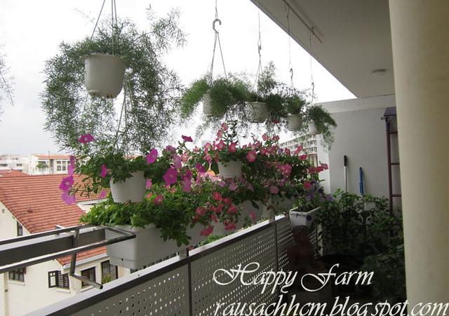 Chậu nhựa Nhật đẹp, bền trồng hoa, rau sạch - 4