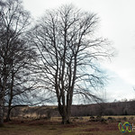 Scottish Countryside at Clava Cairns