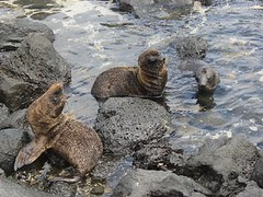 animal, marine mammal, fauna, sea otter, harbor seal, wildlife,