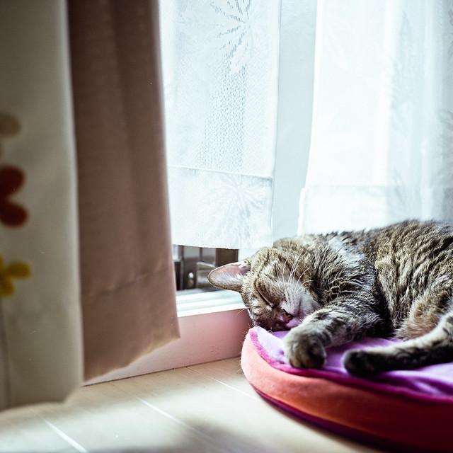 quiet sleep, before noon