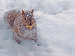 Cold Nuts