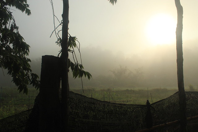 Morning mist over the fields in Thailand