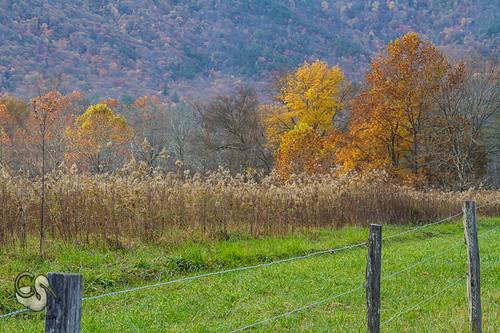 autumn fall fence tn tennessee fallcolors smokies smokymountains greatsmokymountains cadescove gsmnp sparkslane canon7d endlessreach1 carlsshaw carlshawphotography