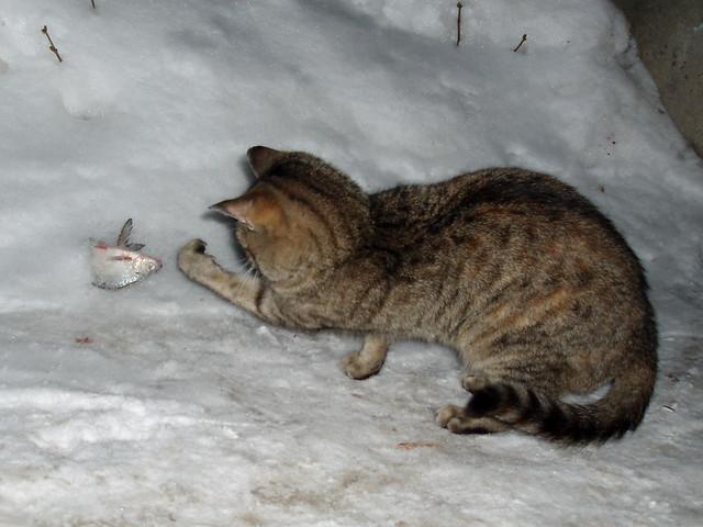 Изображение 1 : Голавль преследует меня...