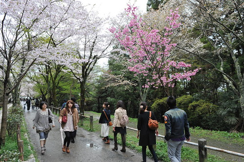 Japan trip - Sakura in Kyoto 2012.