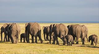 IMG_1507 Amboseli, Kenya