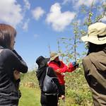 りんごやSUDA果樹園風景3