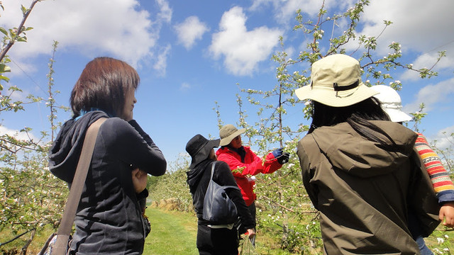 りんごやSUDA果樹園風景3_up