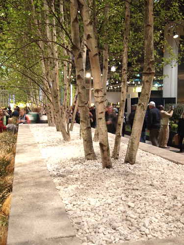 white birches, probably the most beautiful thing at the show
