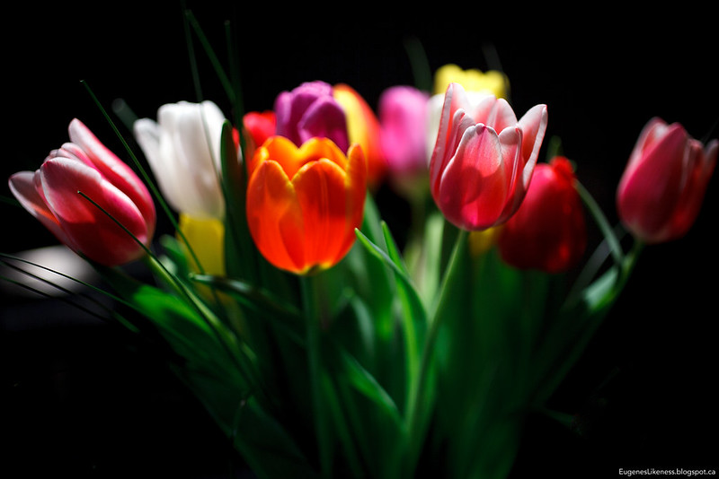 Flowers | Tulips for you