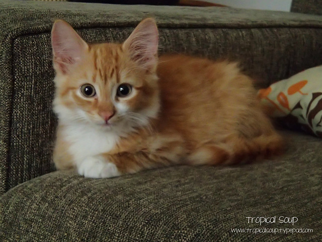 Ginger Ninja