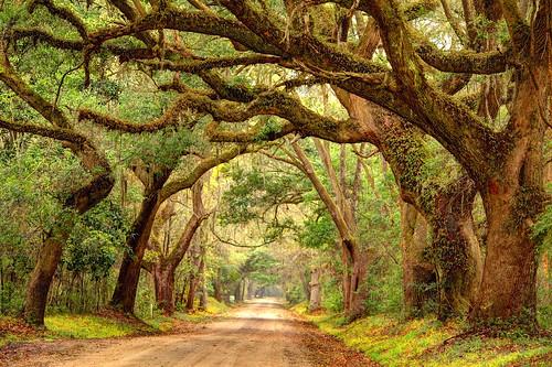 road trees rural south southcarolina