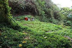 柴山下西子灣海岸前原本應該綠蔭遮天的海岸林,因山友私闢為休息區,並湧泉之便種起菜園來,都不利於原始棲地營造。