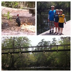 Oleno State Park #outdoors Great spot 4 picnic #hiking #camping  #nature #hswildlife #swfl #onetanktrips