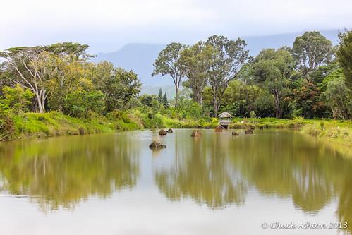 Wai_Koa_Plantation_2013-21