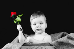 [Free Images] People, Children - Babys, People - Flowers / Plants, Rose ID:201303310400