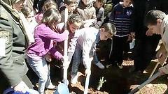 阿爾及利亞學童種樹慶祝2013年3月21日國際森林日。(照片提供:FAO)