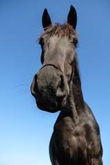 Horselfie