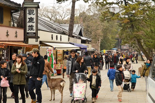 Deer just milling around with the people near Todai-ji Temple