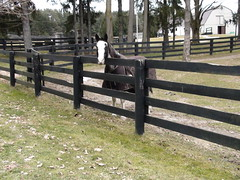outdoor structure(0.0), home fencing(1.0), fence(1.0), split rail fence(1.0),
