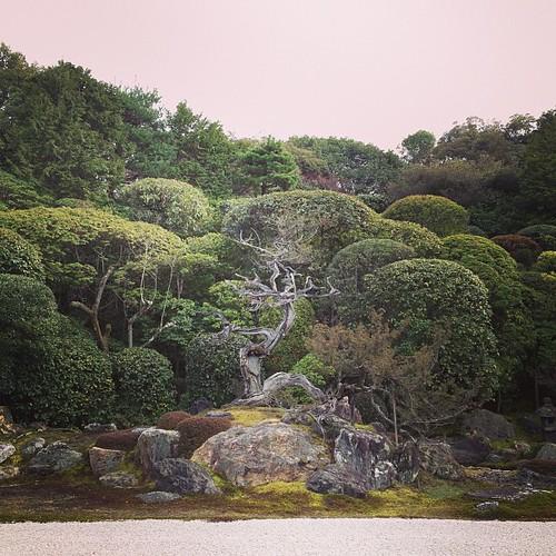 金地院 亀島