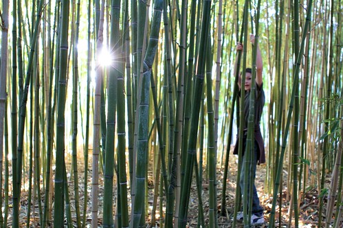 Silas and bamboo grove_5328
