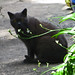 Small photo of Shadow cat