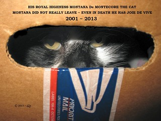 Rest in Peace 2001 - 2013 ~ His Royal Highness Montana de Montecore the Cat aka *Montana*