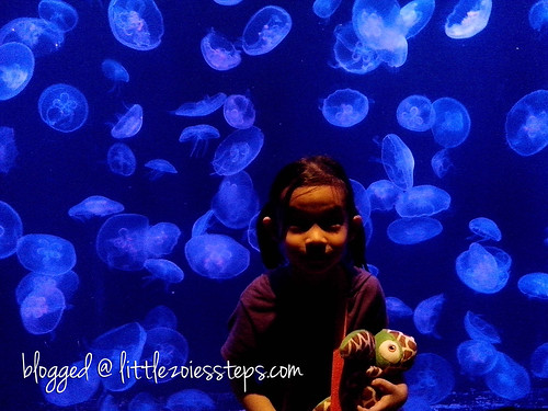 Jellies at Manila Ocean Park