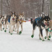 UP 200 sled dog race by Gary of the North(Footsore Fotography)
