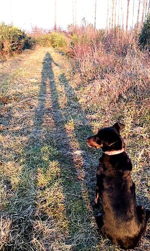 Shadow me, shadow minnie