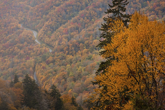 Smoky Mountain National Park - Peak Fall Colors