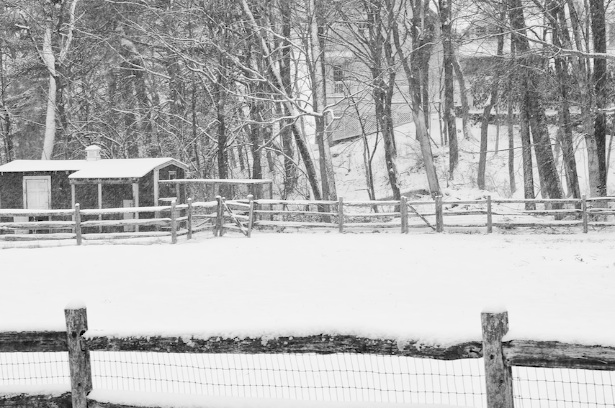 winter shed bw