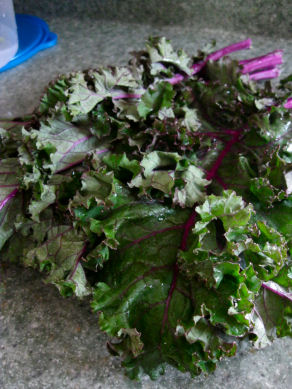 Lady Moon Organic Red Kale