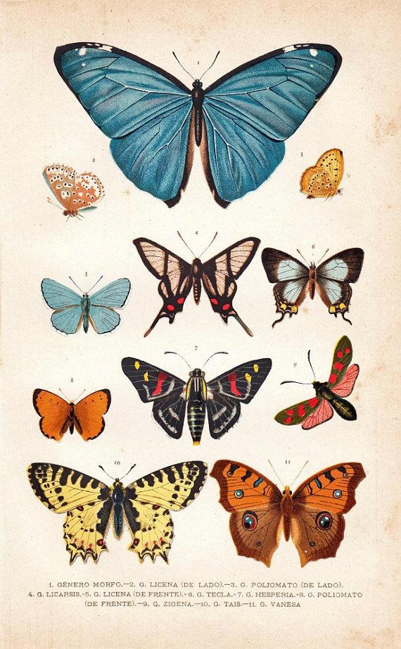 Hazlo tú mismo: Mariposas de pared y súper ensalada - Wayaiulandia