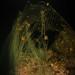 A night dive at 'Tres Picos'