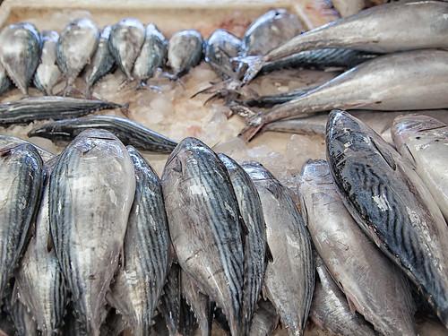 Dubai Fish Market #03