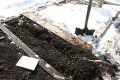 sowing in snow 019