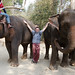 With our elephants