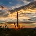 1608 Saguaro National Park Sunset by c.miles
