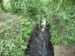 Kings Norton Local Nature Reserve - River Rea