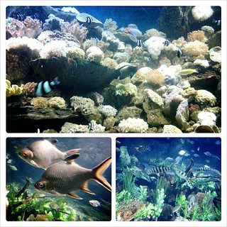 SeaWorld 1