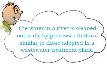 NCERT Class VII Science Chapter 18 Wastewater Story