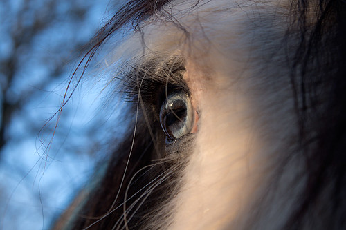 24) Closeup of Eyes