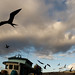 Fishermen & Frigate Birds