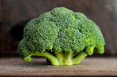 broccoli tree, lion king style