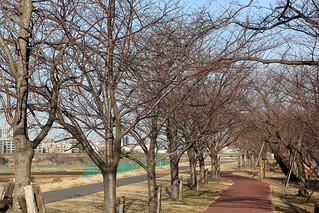 Tama River jogging track