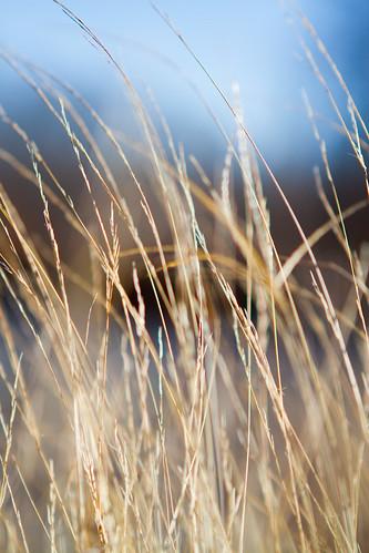 sun nature grass construction weeds woods photographer flag air breath flare sunflare nashvillephotographer