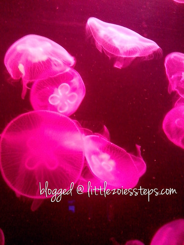 Jellies Exhibit at Manila Ocean Park