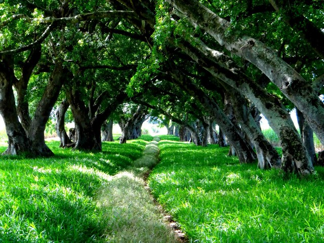 Beautiful green lane I saw just out of Blue Bay